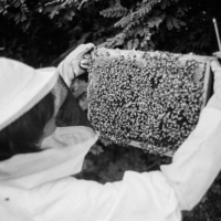 In the black and white at work gallery: Beekeeping