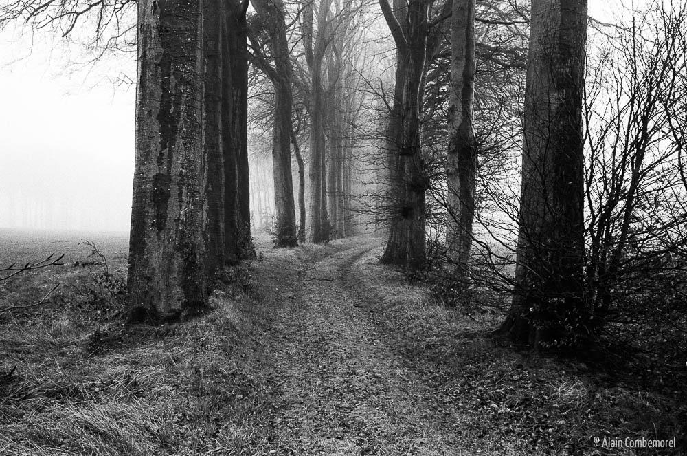 Un chemin en forêt, dans le brouillard. Noir et Blanc