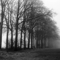 Picture in black & white of trees in the fog taken from the road, somewhere in North of France.
