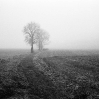 Picture in black & white of a Foggy field around my village