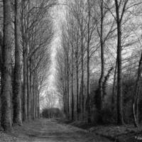 Wandering in the woods (Willencourt)